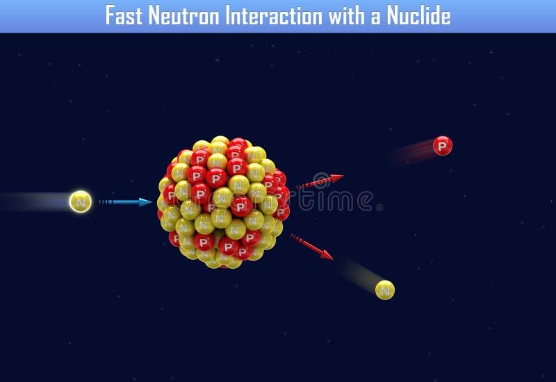 与核种的快中子互作用 库存例证