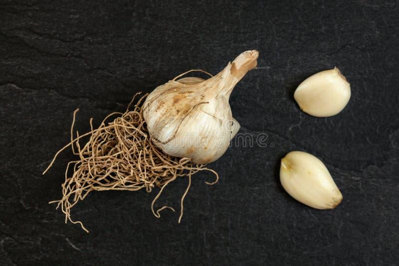 与根、整个电灯泡和两个丁香的自然大蒜在黑板岩板,照片从上面 库存图片