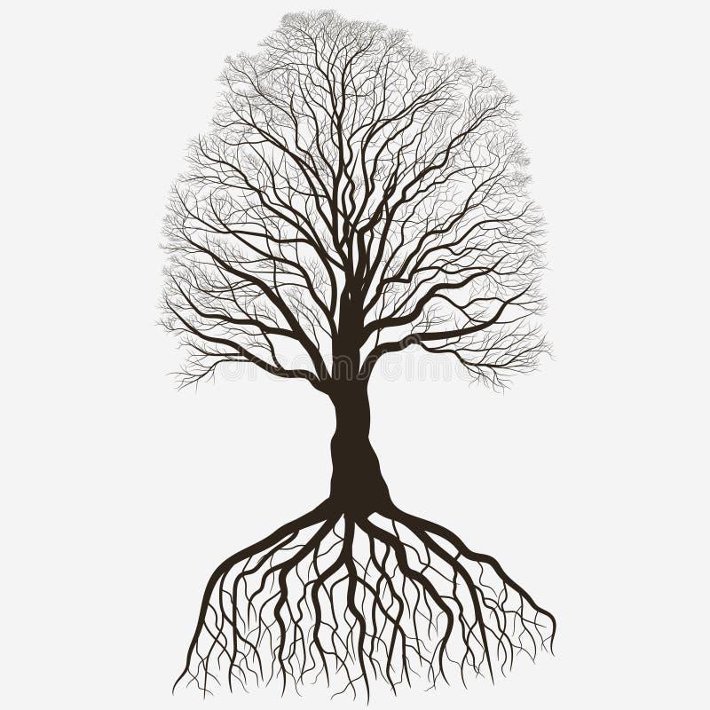 与根系统的树剪影 黑光秃的橡木概述 详细图象 向量 向量例证