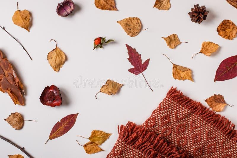 与格子花呢披肩的秋天集合和烘干叶子 图库摄影