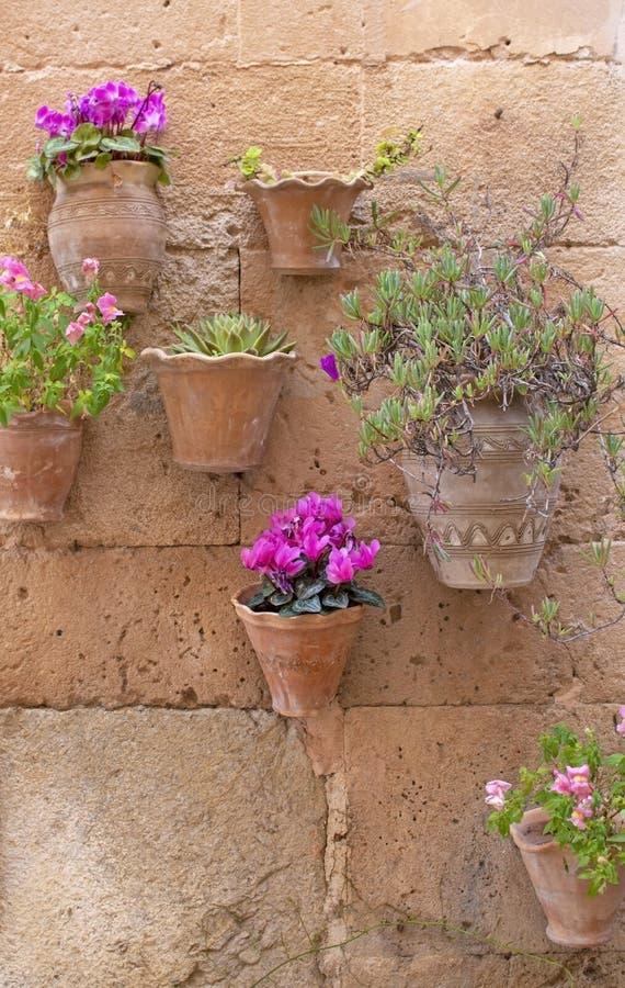 与桃红色仙客来花的美丽的赤土陶器花盆 免版税库存照片