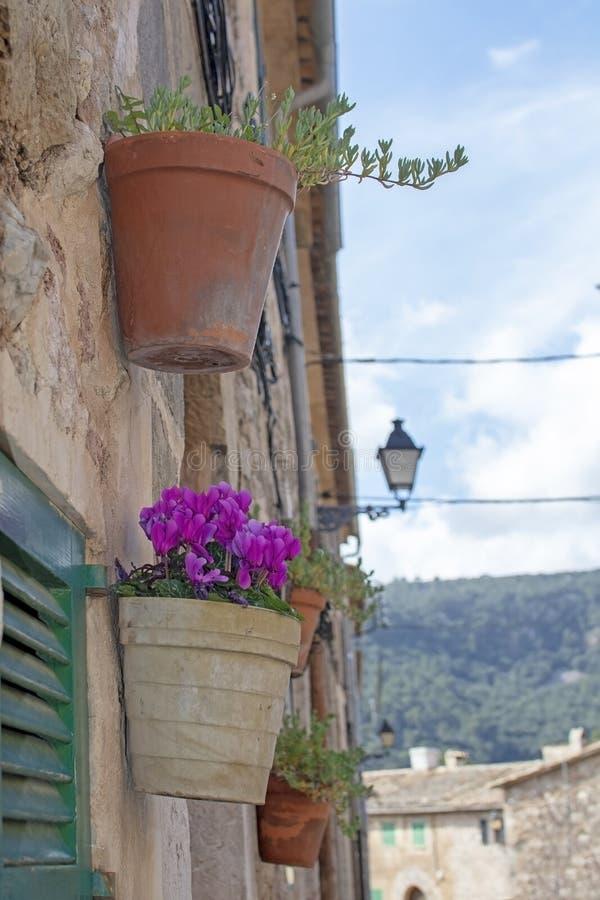 与桃红色仙客来花的美丽的赤土陶器花盆 图库摄影