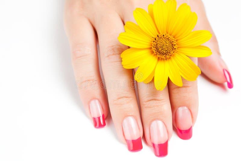 与桃红色修指甲的妇女现有量 库存照片