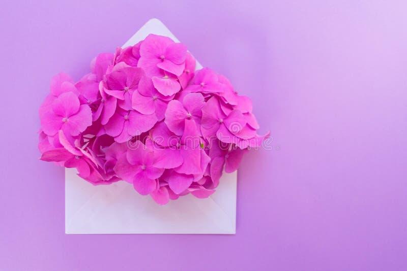与桃红色八仙花属花的被打开的信封在柔和的淡紫色背景 明信片的布局 库存照片