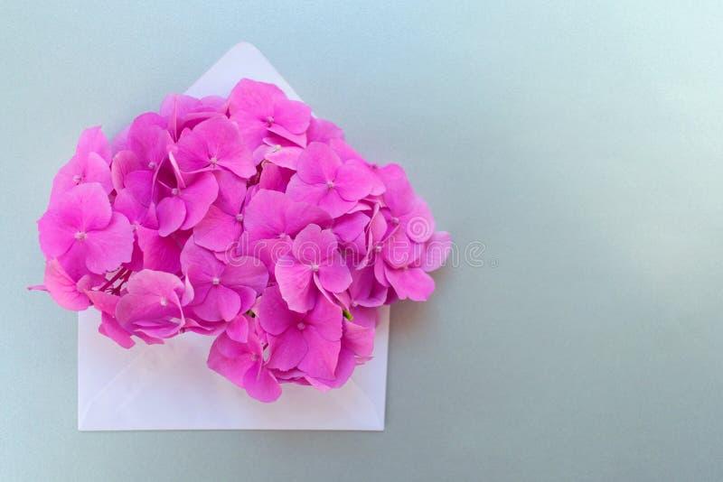 与桃红色八仙花属花的被打开的信封在银灰色背景 r 库存照片