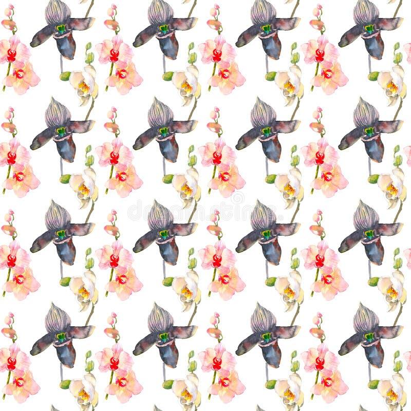 与桃红色和黑兰花的热带无缝的样式开花 在白色背景隔绝的热带花卉墙纸 库存例证