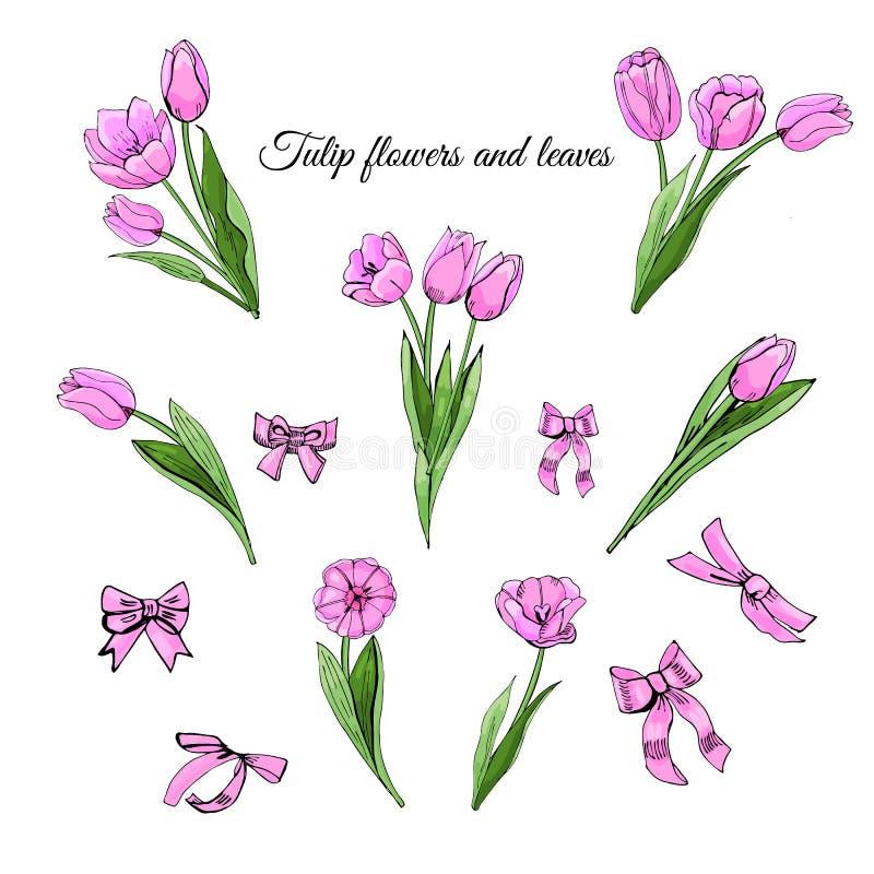 与桃红色在白色背景隔绝的郁金香花、叶子和弓的被设置的手拉的色的剪影 免版税库存照片