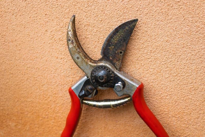 与桃红色墙壁的红色园艺剪刀pruner特写镜头在背景影像 库存图片