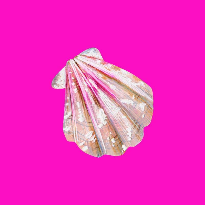 与桃红色海壳扇贝的珍珠母 皇族释放例证