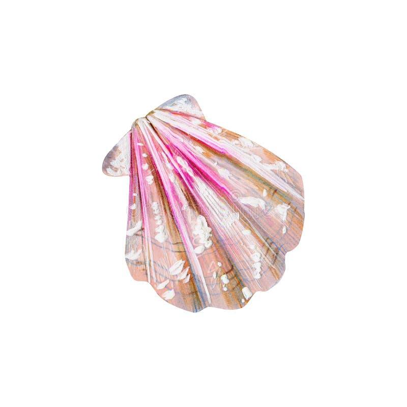 与桃红色海壳扇贝的珍珠母 库存例证