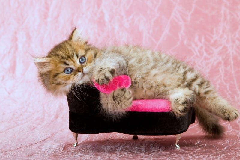 与桃红色爱重点的逗人喜爱的猫 库存照片