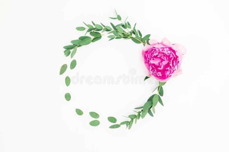 与桃红色牡丹花、金丝桃属植物和玉树的花卉圆的框架在白色背景 平的位置,顶视图 免版税库存照片