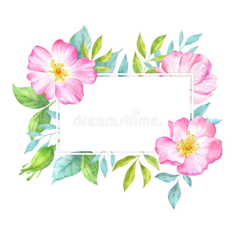与桃红色狂放的玫瑰色花、芽、绿色叶子和分支的水彩花卉长方形框架 皇族释放例证