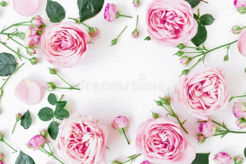 与桃红色玫瑰、芽和叶子的花卉框架在白色背景 平的位置,顶视图 背景蒲公英充分的草甸春天黄色 库存照片