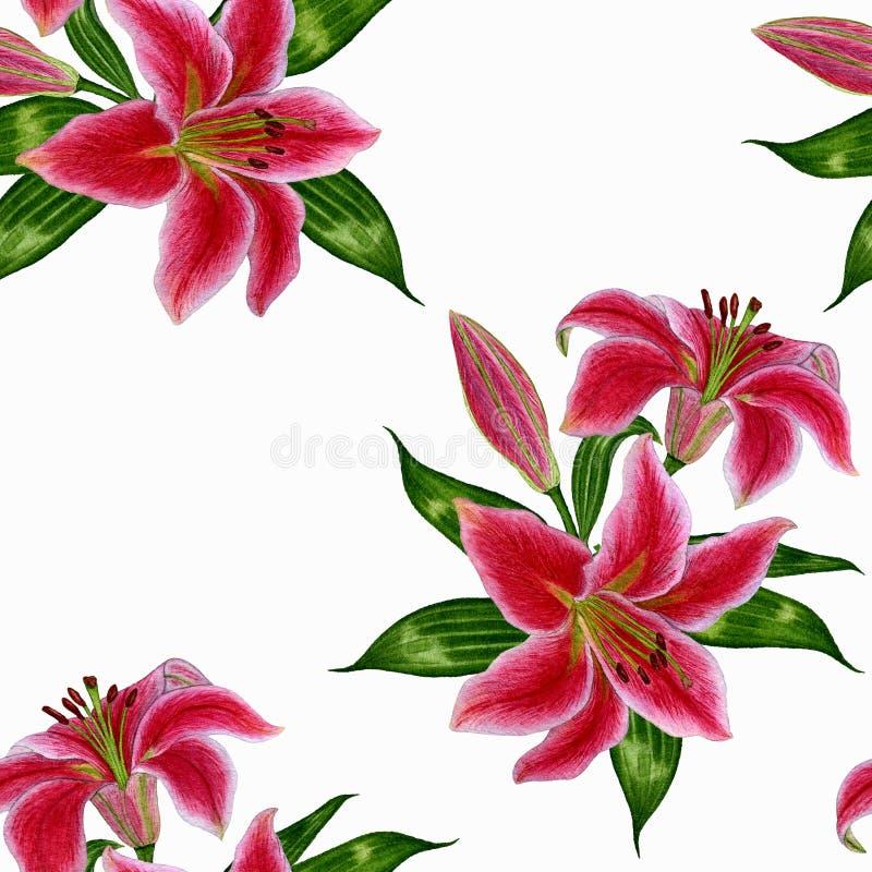 与桃红色百合的美好的无缝的样式在白色背景开花 皇族释放例证