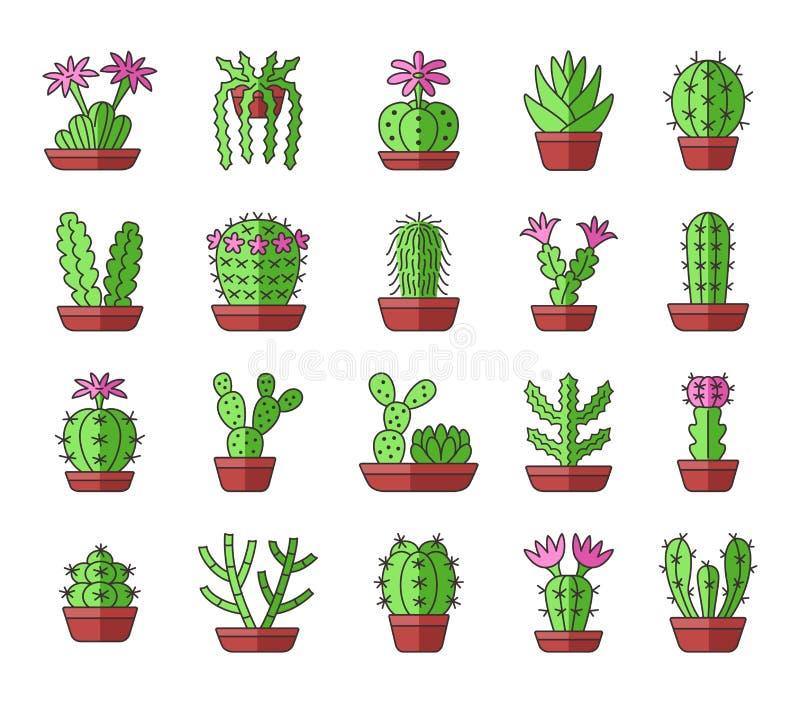 与桃红色花的绿色仙人掌 玻璃容器的a沙漠植物 皇族释放例证
