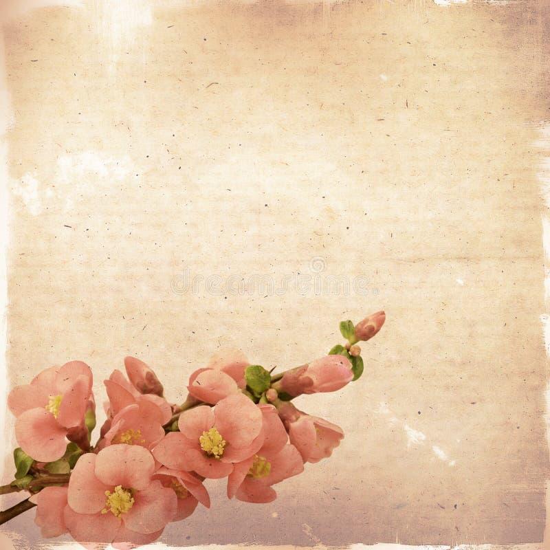 与桃红色花的葡萄酒花卉背景在一棕色backgroun 向量例证