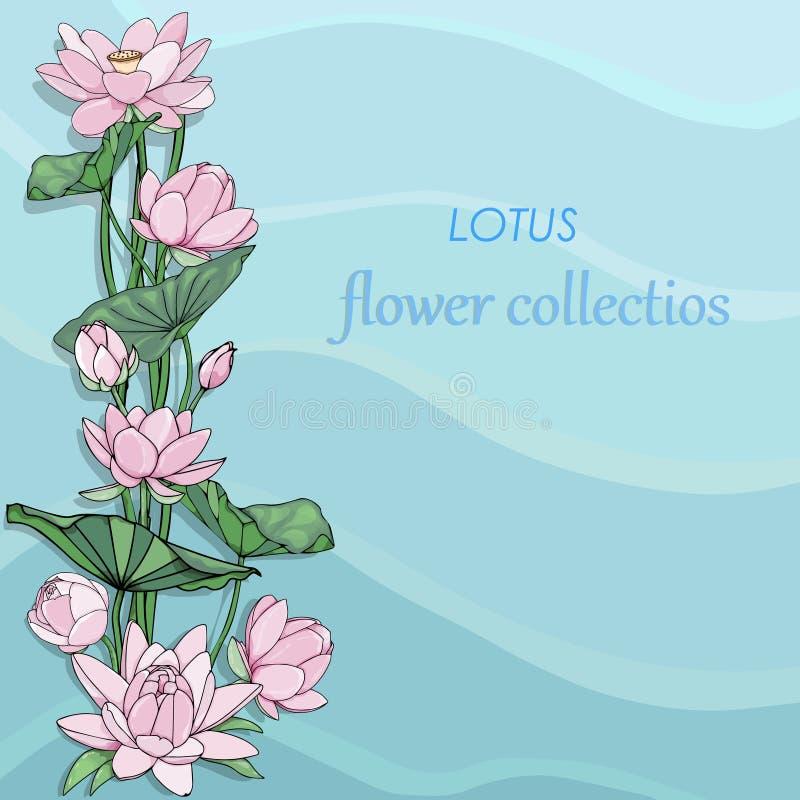与桃红色莲花的卡片 水花开花贺卡 庭院莲花花卉背景 向量例证