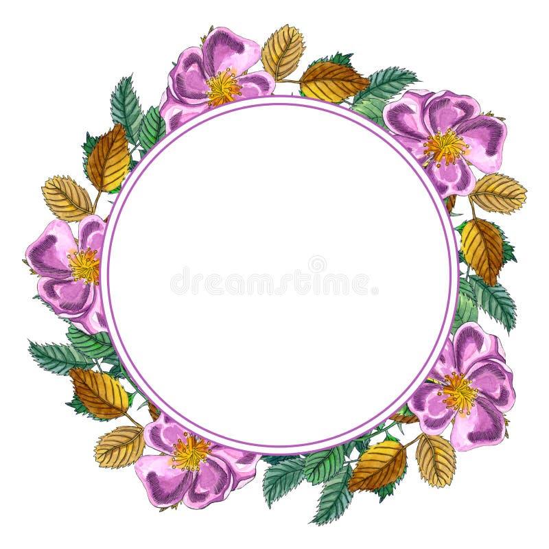 与桃红色野生玫瑰的花卉圆的花圈,玫瑰果,狗上升了,绿色和黄色叶子 被隔绝的手拉的水彩框架  库存例证