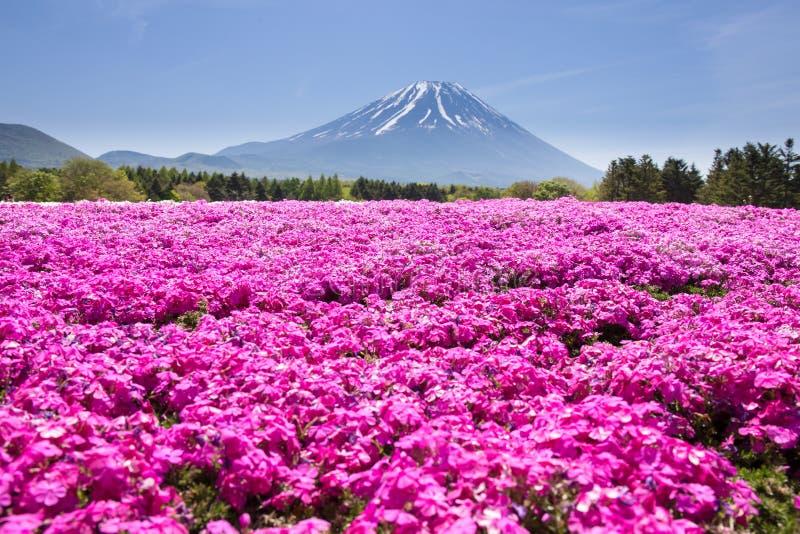 与桃红色青苔佐仓或有山的富士山梨,亚帕樱花的领域的日本Shibazakura节日 库存图片