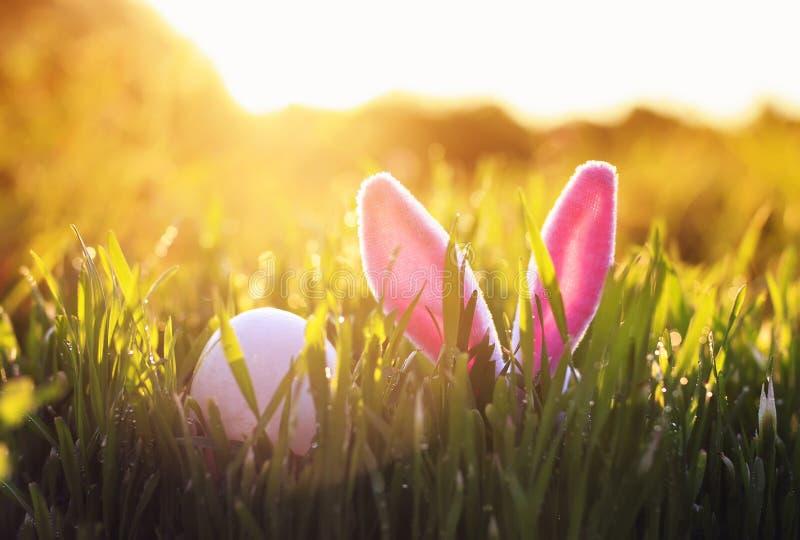与桃红色黏附在绿色水多的草外面的兔子耳朵和鸡蛋的复活节场面在春天草甸 免版税图库摄影