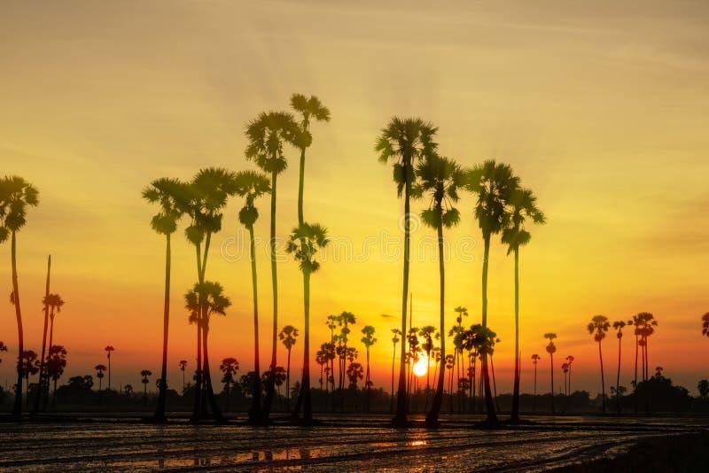 与桄榔树的日出风景在早晨 库存照片
