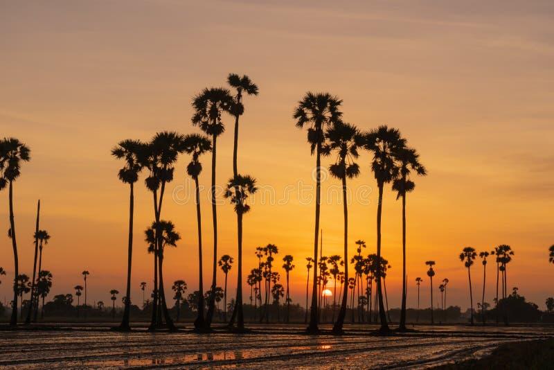 与桄榔树的日出风景在早晨 免版税库存照片