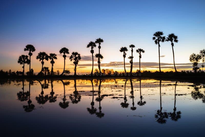 与桄榔树的日出风景在稻田在早晨 湄公河三角洲, Chau Doc, An Giang,越南 库存图片