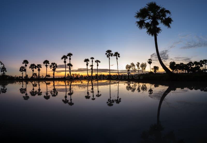 与桄榔树的日出风景在稻田在早晨 湄公河三角洲, Chau Doc, An Giang,越南 免版税库存图片