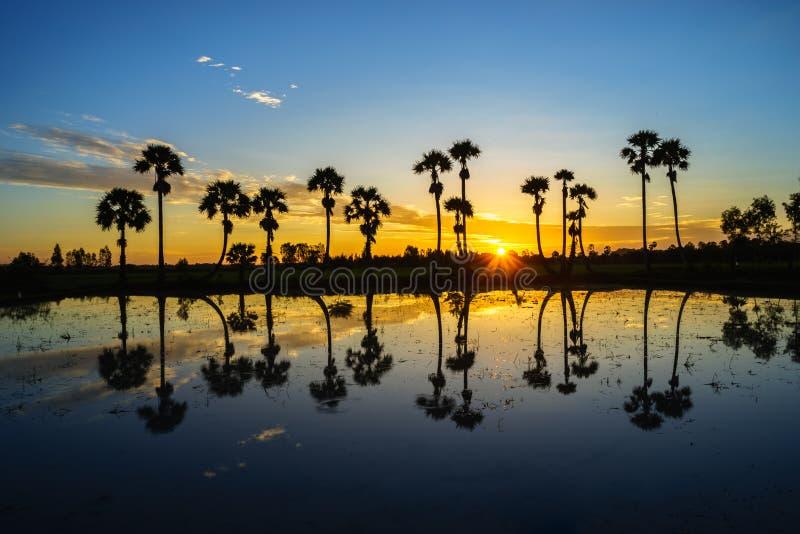 与桄榔树的日出风景在稻田在早晨 湄公河三角洲, Chau Doc, An Giang,越南 图库摄影