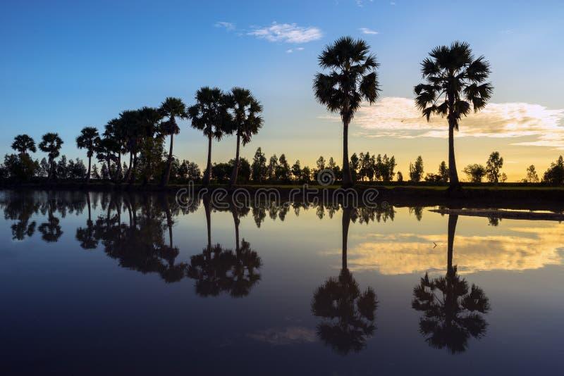 与桄榔树的日出风景在稻田在早晨 湄公河三角洲, Chau Doc, An Giang,越南 库存照片