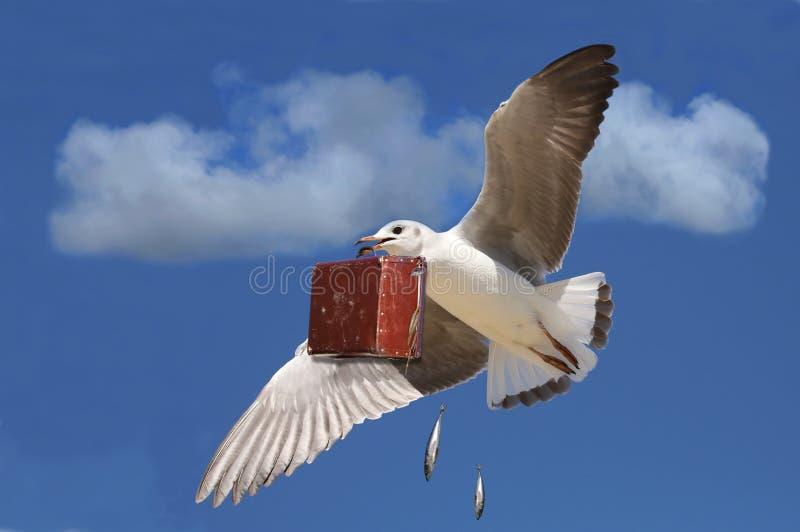 与案件的旅行的海鸥 免版税图库摄影