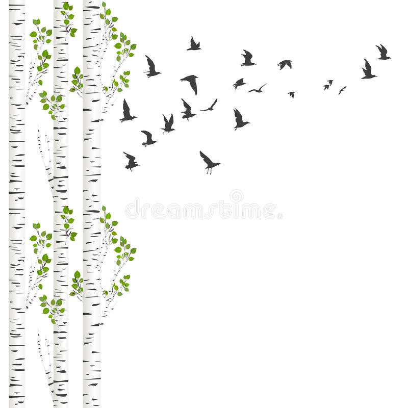 与桦树和鸟的背景 皇族释放例证