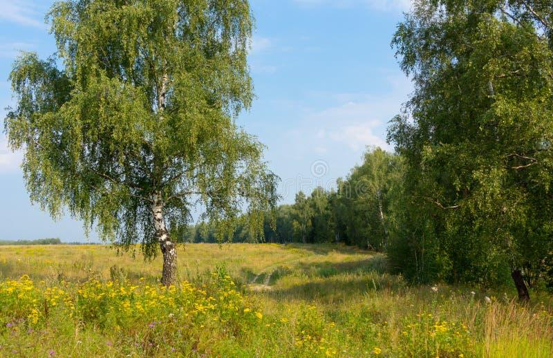 与桦树的夏天农村风景 图库摄影