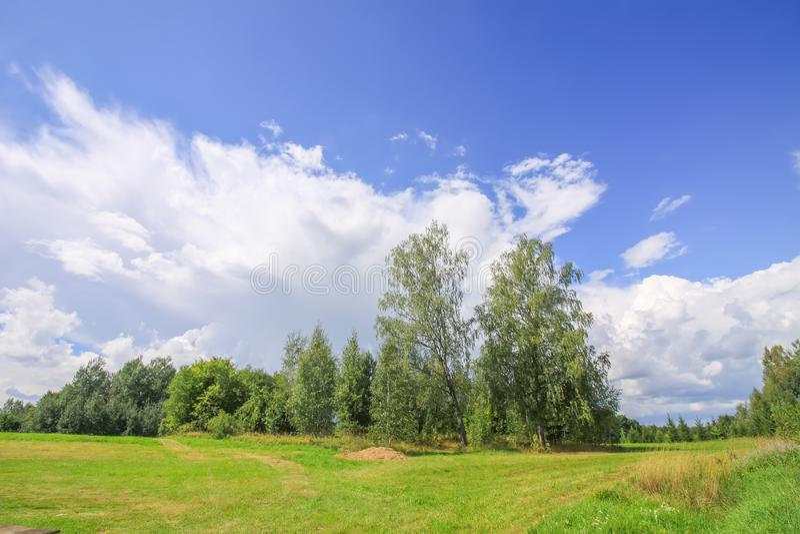 与桦树的夏天风景在拉脱维亚,东欧 免版税库存照片