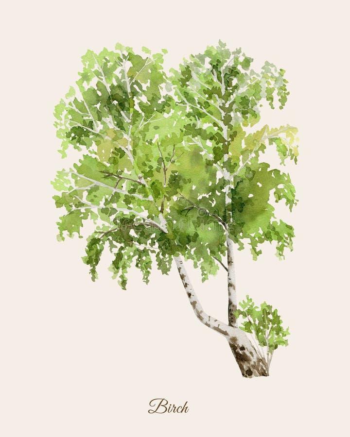 与桦树的手画水彩海报 向量例证