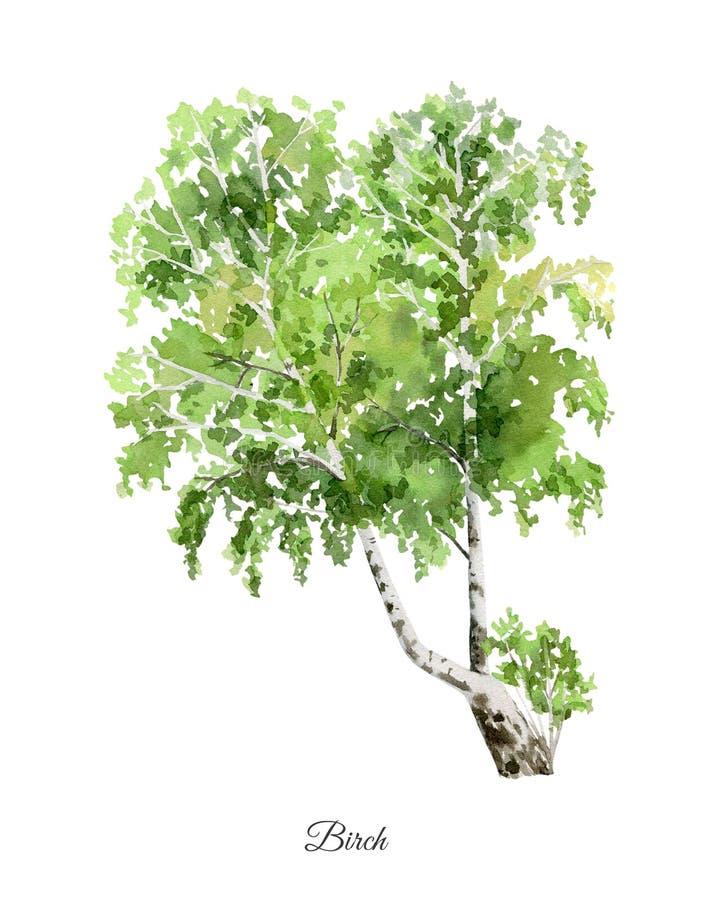 与桦树的手画水彩海报 皇族释放例证