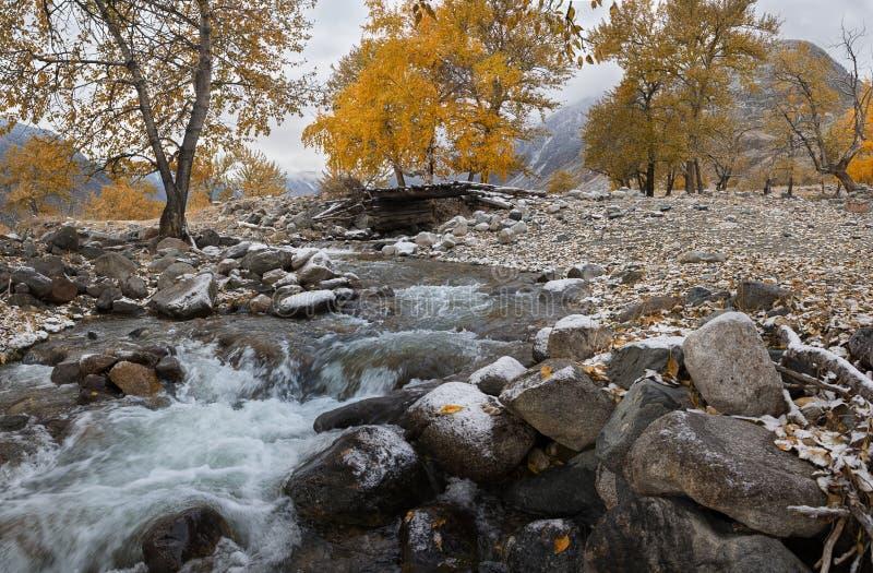 与桦树的秋天风景与金黄黄色叶子和冷的小河 秋天与河、桦树和老Woode的山风景 免版税库存图片