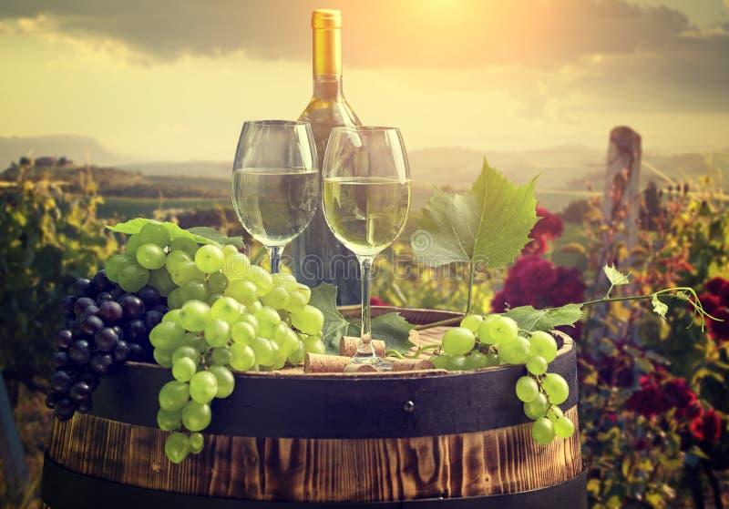 与桶的白葡萄酒在葡萄园在托斯卡纳,意大利 库存图片