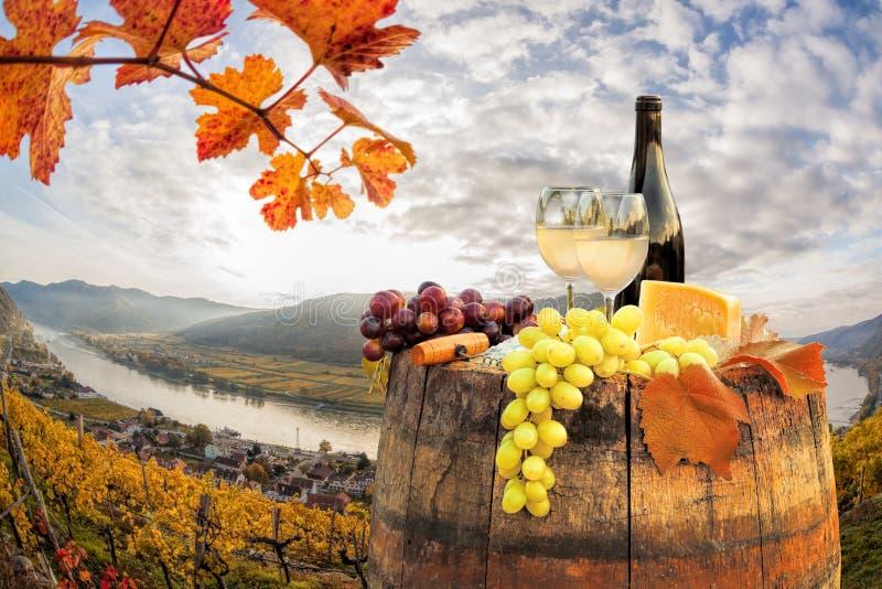 与桶的白葡萄酒在葡萄园在瓦豪,波美丝毛狗,奥地利 库存图片