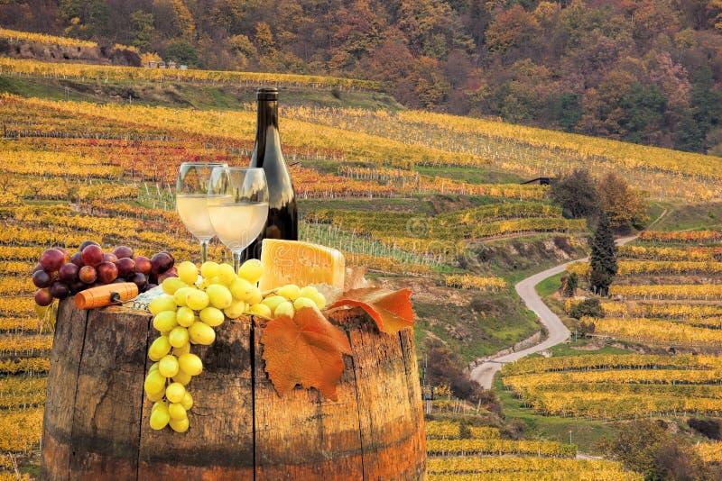 与桶的白葡萄酒在葡萄园在瓦豪,波美丝毛狗,奥地利 图库摄影