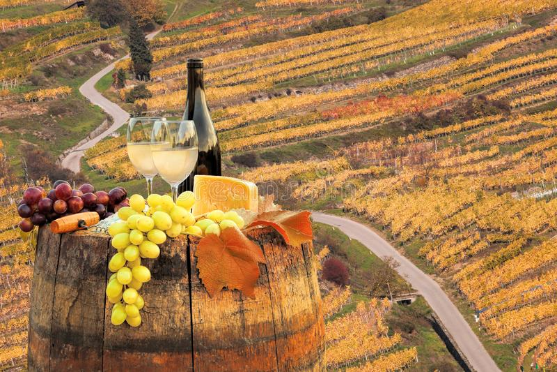 与桶的白葡萄酒在葡萄园在瓦豪,波美丝毛狗,奥地利 免版税库存照片