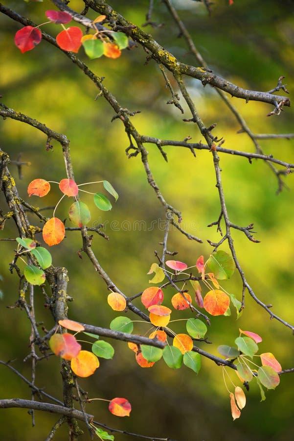 与梨叶子的秋天早午餐 免版税图库摄影