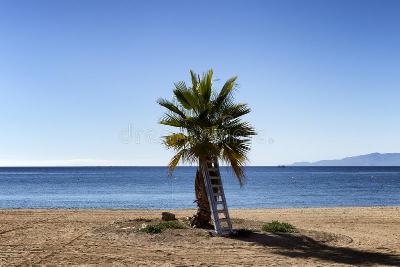 与梯凳的棕榈树 库存照片
