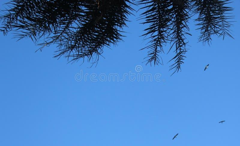 与棕榈叶的天空背景 库存照片
