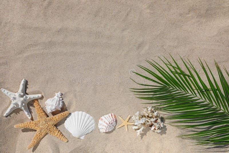 与棕榈叶的平的被放置的在沙滩的构成和贝壳 库存照片