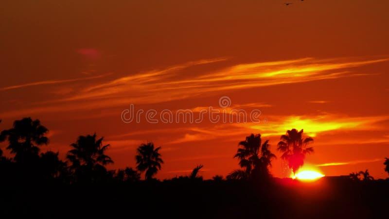 与棕榈树剪影的橙色日落 库存照片