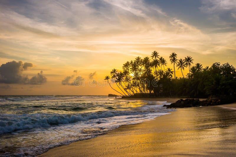 与棕榈树剪影的狂放的热带海滩在日落的 库存照片