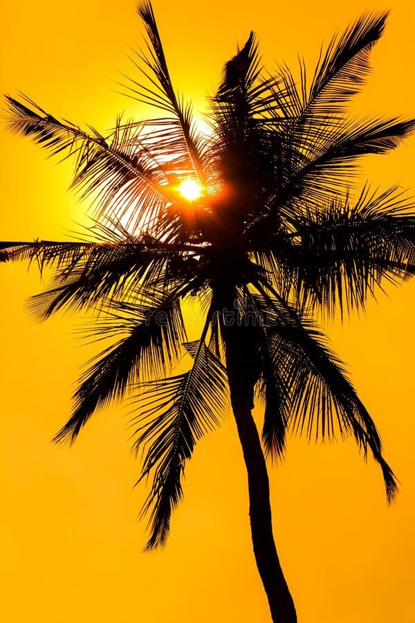 与棕榈树剪影的黄光日落 免版税库存图片