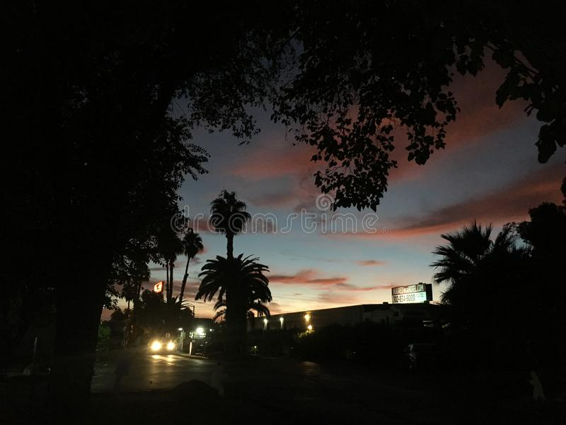 与棕榈树和车光的拉斯维加斯地平线 免版税库存照片